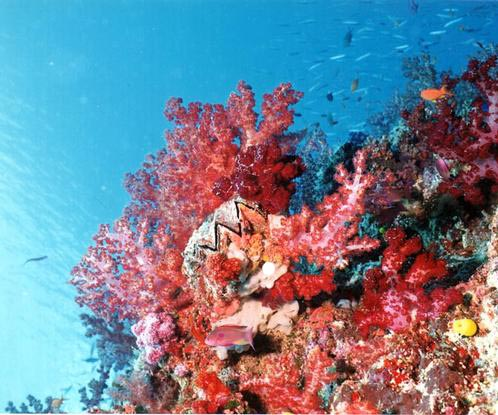 Degradation Of Coral Reefs