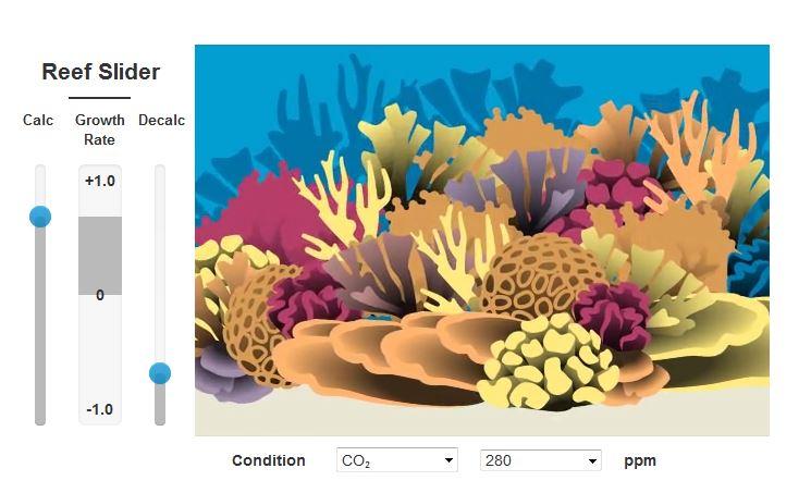 reef slider